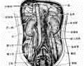 男性的膀胱炎有些什么症状表现